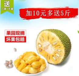 20斤海南菠萝蜜新鲜水果现摘包邮非红心红肉波罗蜜另有25-30规格