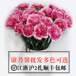 康乃馨鲜花批发 上海同城速递单多头康乃馨18只扎江浙沪2扎包邮