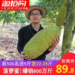 【前500名发22-25斤】海南木菠萝蜜 新鲜水果假榴莲18斤多省包邮
