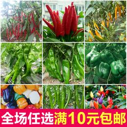 杂交一代朝天椒指天椒种子七彩椒螺丝椒庭院蔬菜种子四季易种辣椒