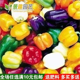五彩甜椒种子 阳台四季播种 秋冬季蔬菜 春季种 五彩辣椒