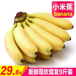 广西小米蕉新鲜水果banana酸甜农家特产粉蕉皇帝蕉芭蕉香蕉西贡蕉