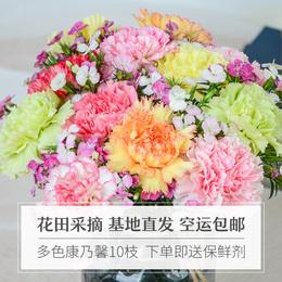 云南康乃馨百合花玫瑰鲜花母亲节花束同城速递空运包邮一扎10支