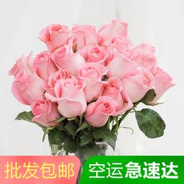 【云南昆明基地直发】玫瑰鲜花批发包邮一扎20朵家用包月一周一花