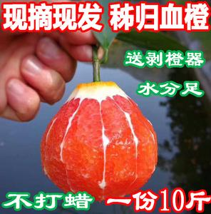 血橙新鲜10斤秭归脐橙红心大个中华红肉甜橙子当季水果现摘超赣南新鲜橙子