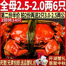 阳澄湖大闸蟹鲜活螃蟹鲜活现货全母大闸蟹大螃蟹母蟹 全母6只