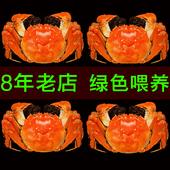 现货苏州阳澄湖大闸蟹协会鲜活特大螃蟹可全母蟹8送2共10只礼盒装