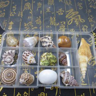 天然贝壳海螺标本礼盒装少年儿童海洋科普材料套装送礼装饰批发