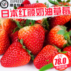 3斤红颜牛奶草莓 丹东99新鲜奶油巧克力草苺 现摘同城顺丰包邮