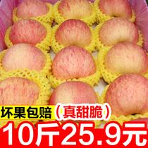 整箱装 一箱丑苹果冰糖心吃 苹果水果10斤当季新鲜红富士 包邮 平果