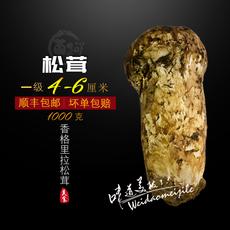 野生松茸菌 新鲜松茸现货4-6厘米两斤顺丰包邮香格里拉松茸新鲜