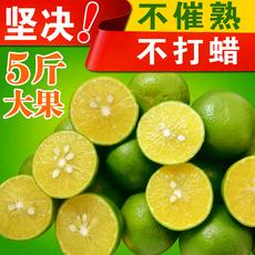 梁老头纯甜5斤皇帝柑 现摘正宗广西贡柑非德庆橘子新鲜水果包邮