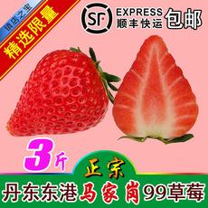 新鲜草莓水果辽宁丹东东港马家岗99九九红颜顺丰包邮奶油孕妇大甜