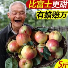 现摘苹果嘎啦新鲜水果脆甜婴儿旮旯面刮泥粉小沙非冰糖心富士时令