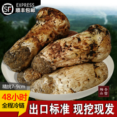 新鲜松茸高品质香格里拉野生松茸菌蘑菇特级7-9cm500g云南土特产