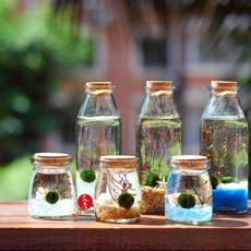 【花厝】包邮幸福毬藻 Marimo 球藻/绿藻球生态瓶圣诞新年创意