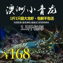 活发野1j青龙虾花龙sf澳大利亚龙虾红龙虾活虾野生大虾