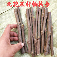 果树苗ab品种无花果el条青皮红肉南北方种植盆栽地栽