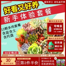 多肉植al组合盆栽肉ts含盆带土多肉办公室内绿植盆栽花盆包邮