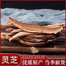正品5ang 东北长ie产 紫灵芝 切片赤灵芝