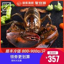 龙虾波aq顿鲜活特大po龙波斯顿海鲜水产大活虾800-900g
