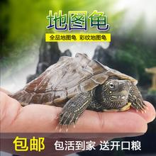 深水吃粪(小)地图情侣au6财 (小)乌ce物水龟观赏龟活物龟包邮