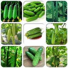 早熟多美滋az2果(小)黄瓜sp秋四季播蔬菜籽 阳台盆栽高产易种孑