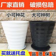 超特大号果树散尾ba5绿萝发财hl筒圆形螺纹加厚仿陶瓷塑料盆