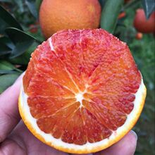 四川资bj塔罗科农家rn箱10斤新鲜水果红心手剥雪橙子包邮