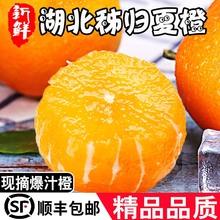 湖北秭bl夏橙酸甜子ck果非伦晚赣南橙 整箱10斤净9斤顺丰