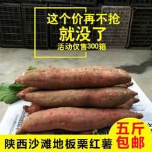 新鲜陕bo沙地板栗薯oj红皮白心山芋地瓜番薯秦薯5斤包邮