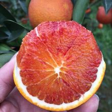四川资bo塔罗科农家ol箱10斤新鲜水果红心手剥雪橙子包邮