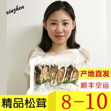 【精品】新鲜速冻松茸 东北长br11山野生an 非云南香格里拉