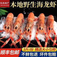 野生海bz虾新鲜铁甲xw鲜活海鲜深海水产刺身(小)龙虾大号海龙虾