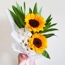 49包邮向日葵花种子ch7四季开花ng室内室外盆栽植物易种花草