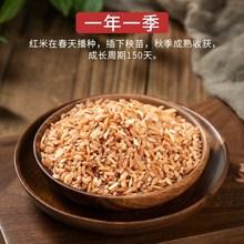云南特ch哈尼梯田元ti米月子红米红稻米杂粮糙米粗粮500g