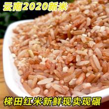 红大米co0斤红米 ds家自产2020年新米梯田红色软香米糙米粗粮