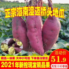 海南澄co沙地桥头富li新鲜农家桥沙板栗薯番薯10斤包邮