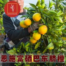 湖北恩co三峡特产新pl巴东伦晚甜橙子现摘大果10斤包邮