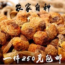 特级姬松co1干货新鲜ta半斤包邮农家自种煲汤食材