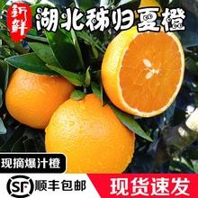 助力湖da秭归夏橙酸si现摘橙子应季榨汁水果整箱10斤包邮