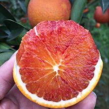 四川资dj塔罗科农家st箱10斤新鲜水果红心手剥雪橙子包邮