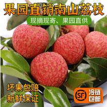 深圳南山do鲜水果妃子sa罂桂味糯米糍3斤5斤10斤冷链包邮