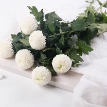 [dpfot]乒乓菊真花昆明花卉市场鲜
