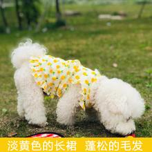 网红菠dq裙子(小)春夏dn咪宠物(小)型犬博美比熊夏季薄式