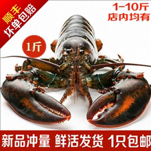 活波士du龙虾鲜活特ty活虾450-550g龙虾海鲜水产活虾1斤 包邮