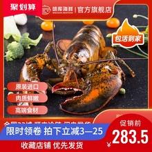 【龙虾ee波士顿鲜活yu龙澳龙海鲜水产大活虾【送鲍鱼】