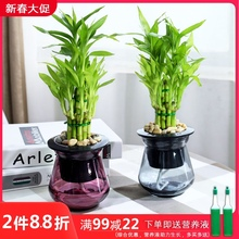 富贵竹ee栽植物 观yu办公室内桌面净化空气(小)绿植盆栽