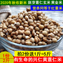 202el新米贵州兴lo000克新鲜薏仁米(小)粒五谷米杂粮黄薏苡仁