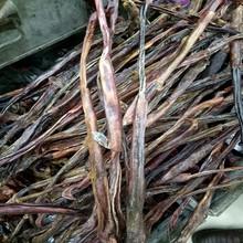 猪鞭干er大种猪鞭5ka中号猪鞭干 中药材另售驴鞭牛鞭羊鞭蛇鞭